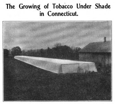 The Growing of Tobacco Under Shade in Connecticut