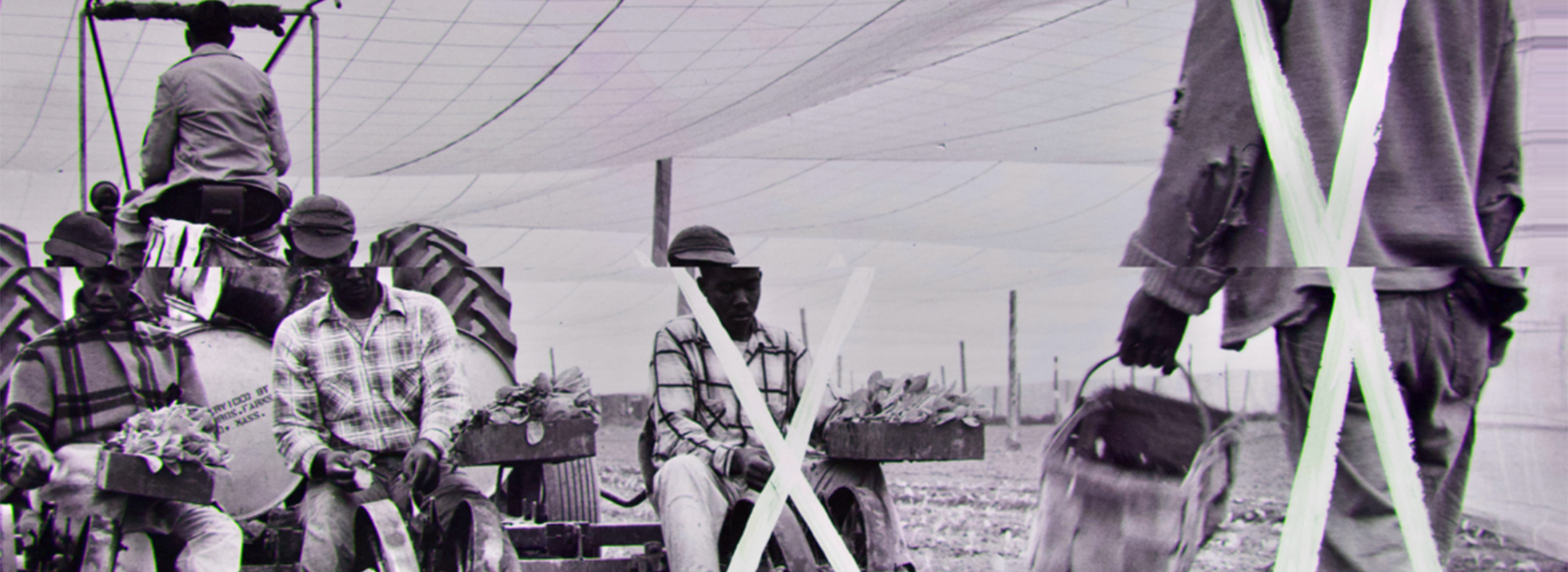 Black and white photo of several workers on a tobacco plantation with an X over two individuals